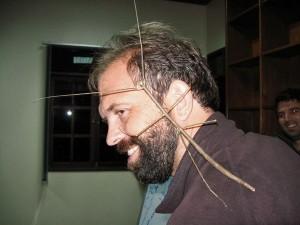 индонезийские палочники (Phasmoptera)